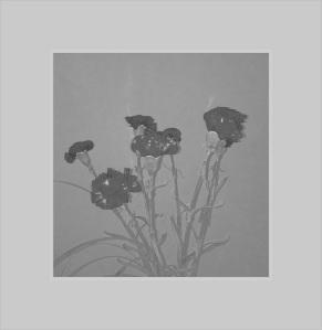 Strange flowers 2